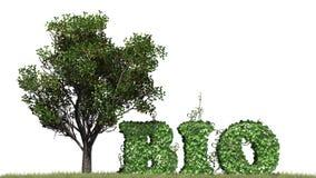 Życiorys - słowo od bluszcz rośliny Zdjęcie Stock
