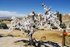 Życzenia drzewo Obraz Royalty Free