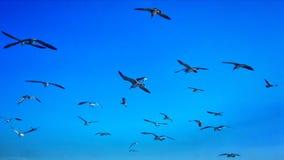 Życzliwi ptaki fotografia stock
