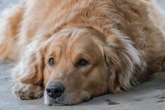 Życzliwy pies Zdjęcia Stock