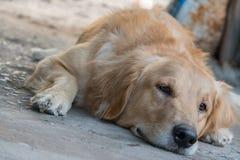 Życzliwy pies Fotografia Stock
