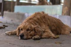 Życzliwy pies Zdjęcie Stock