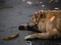 Życzliwy pies Obrazy Stock