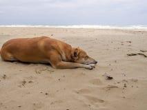 Życzliwy pies szczęśliwie kłama na plaży podczas dnia czasu z dennym tłem Zdjęcie Stock