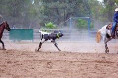 ?ydki Roping rywalizacja Przy Australijskim rodeo zdjęcie royalty free