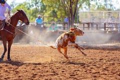 ?ydki Roping rywalizacja Przy Australijskim rodeo obrazy royalty free
