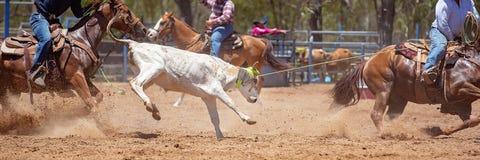 ?ydki Roping rywalizacja Przy Australijskim rodeo fotografia stock