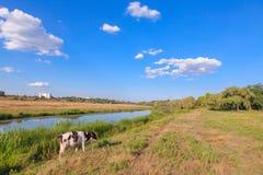Łydkowa pastwiskowa pobliska rzeka Obraz Royalty Free