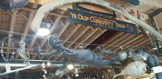 Ye Olde Curiosity Shop sign with Fiji mermaid and many other objects royalty free stock image