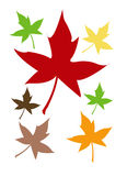 Through the year. Leaves of various colours through the year royalty free stock photography