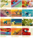 Year with butterflies and flowers Royalty Free Stock Photography