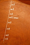 Year circle of old teak wood Stock Photo
