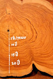 Year circle of old teak wood Stock Photography