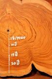 Year circle of old teak wood Stock Photography