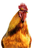 2017 year of the fire rooster. Fire cock  on white background Stock Photo