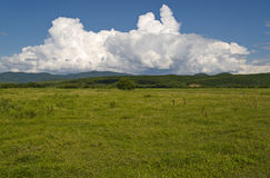 Year green meadow and cloudy sky Stock Images