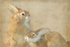 Year Of The Hare Stock Photography