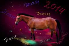 Year of a horse Stock Photography