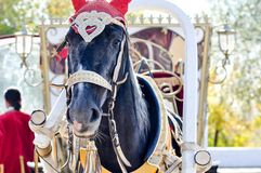 2014 year of the horse, the horse of wedding. City of Orenburg, Southern Ural, Russia Stock Image