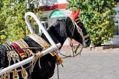 2014 year of the horse, the horse of wedding. City of Orenburg, Southern Ural, Russia Royalty Free Stock Photo