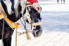 2014 year of the horse, the horse of wedding. City of Orenburg, Southern Ural, Russia Royalty Free Stock Images