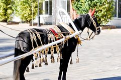 2014 year of the horse, the horse of wedding. City of Orenburg, Southern Ural, Russia Stock Photography