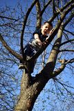 4 year old boy on the tree has problem to come down from tree stock photos