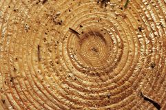 Year rings. Closeup of a tree with yearly growth rings Stock Photography