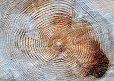 Year Rings on Tree Trunk Stock Photography