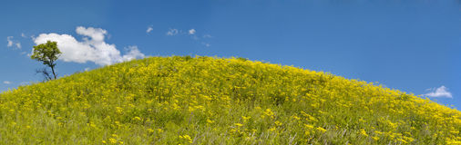 Year solar landscape, flowering hill, Rossiya, pan Stock Images