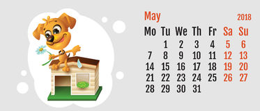 2018 year of yellow dog on Chinese calendar. Fun dog fortune telling on chamomile. Calendar grid month May. Vector cartoon illustration Royalty Free Stock Image