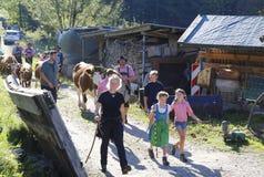 Yearly public Pasture drift in Sasbachwalden, Black Forest,