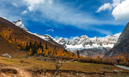 Yearning Snow Mountain. Four girls mountain autumn exceptionally beautiful Stock Images
