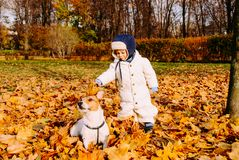 1-2 years boy playing with friendly dog pet at fall autumn park Stock Photography