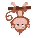 The years of the monkey. Stock Images
