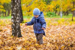 1 years old baby walks on fallen leaves Royalty Free Stock Photos