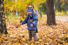 1 years old baby walks on fallen leaves Royalty Free Stock Image