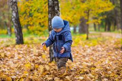 1 years old baby walks on fallen leaves Stock Images