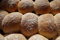 Yeast buns tray horizontal Stock Images
