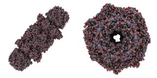 Yeast proteasome. Chemical structure of the yeast proteasome. The proteasome breaks apart unneeded and damaged proteins inside the cell. Two different views of Royalty Free Stock Images