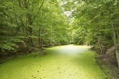 Yedigoller/博卢/土耳其,夏季,森林风景 免版税库存照片