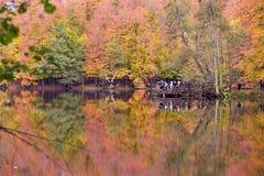 Yedigoller Nationaal Park Stock Foto