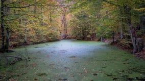 Yedigoller Nationaal Park, Bolu - de Herfstlandschap in zeven meren Royalty-vrije Stock Fotografie