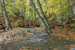 Yedigoller National Park. Beautiful, bolu. stock image