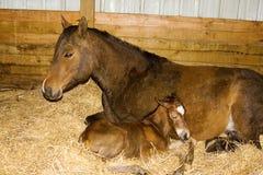 Yegua y potro recién nacido Imagenes de archivo