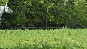 Yeguas y potros de Warmblood en prado