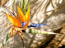 Of Yehuda Bird van Paradijs 2010 Royalty-vrije Stock Foto