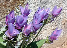 Or Yehuda Bouquet of Curcuma 2007 Stock Image