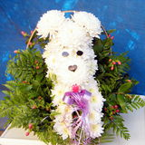 Or Yehuda chrysanthemum dog 2010 Royalty Free Stock Images