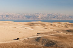 Yehuda desert and dead sea. SUV driving towards the dead sea in yehuda desert Stock Images